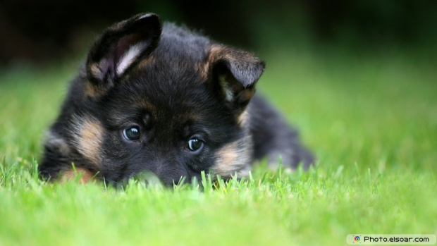 A Small Dog On Green Grass