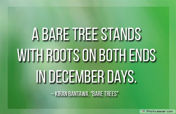 Kiran Bantawa ,Bare Trees, December Quotes, Sayings About December, Quotes Images
