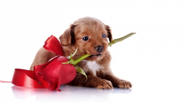 A dog with a flower in his mouth