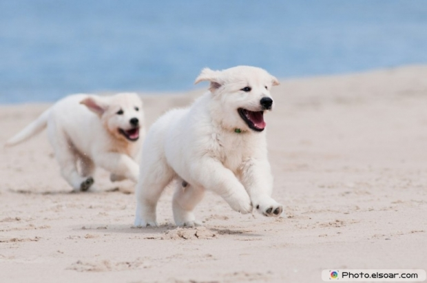 Adorable Puppies On The Beach