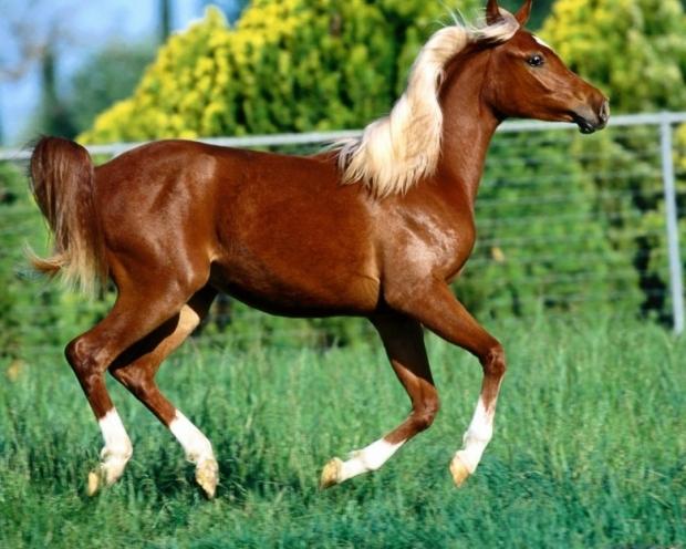 Amazing Horses 2