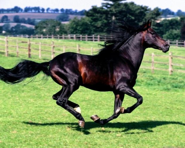 Amazing Horses 3