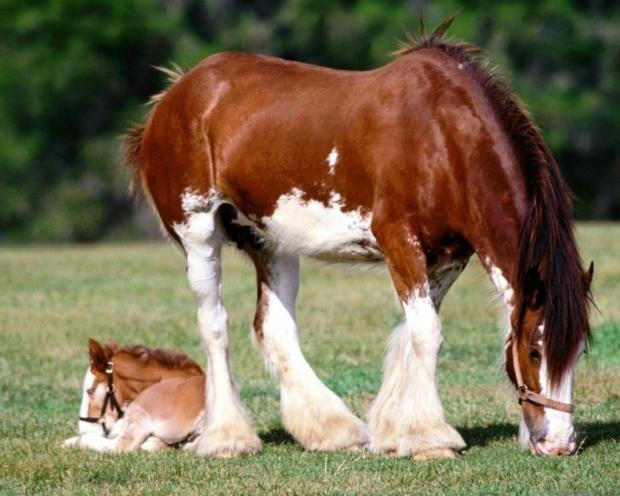 Amazing Horses 4