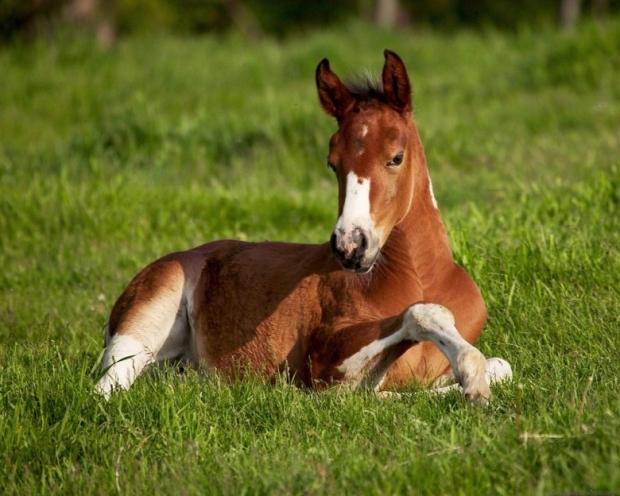 Amazing Horses 5