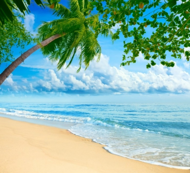 Amazing Tropical Nature HD Pictures 1