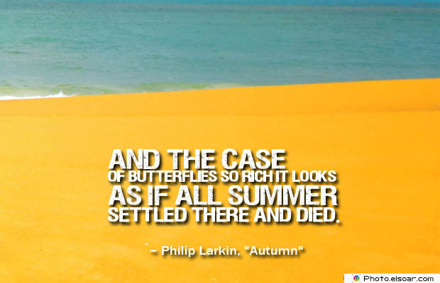 Butterflies Quotes , And the case of butterflies so rich it looks