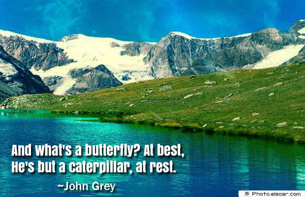 Butterflies Quotes , And what's a butterfly
