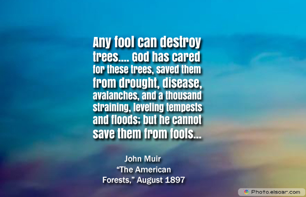 Short Strong Quotes , Any fool can destroy trees