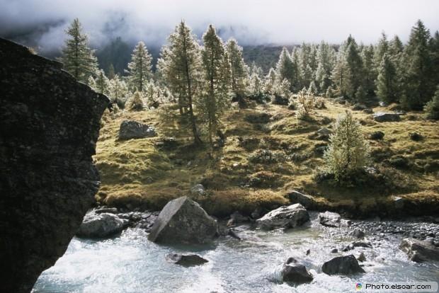 Autumn Trees Next To River