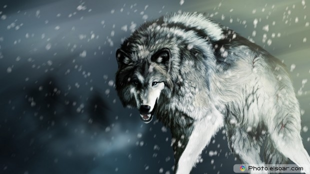 Awesome Wolf HD Wallpaper