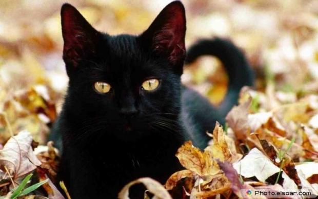 Beautiful+Cute Cat A