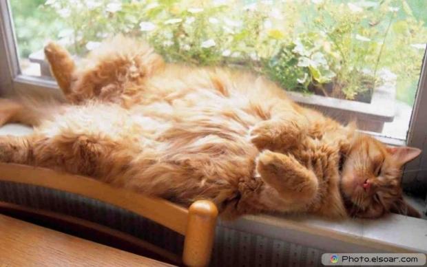 Beautiful+Cute Cat D