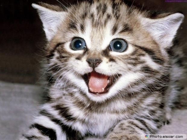 Beautiful+Cute Cat E