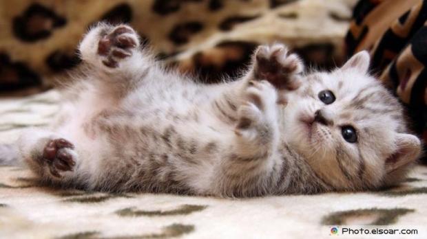 Beautiful+Cute Cat F