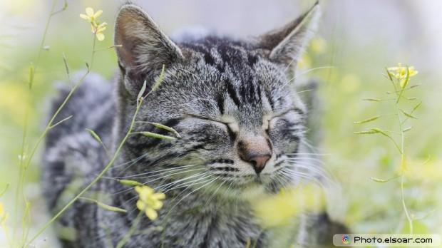 Beautiful Cat Full HD Wallpaper