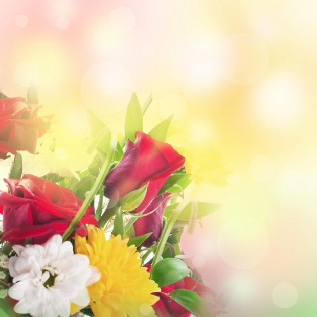 Beautiful Flowers Pictures 1