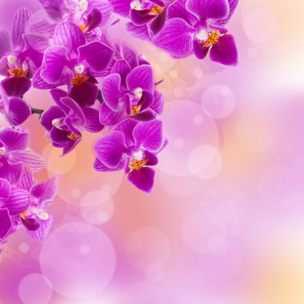Beautiful Flowers Pictures 2
