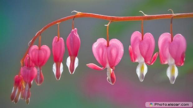Beautiful Flowers. Free HD Wallpaper
