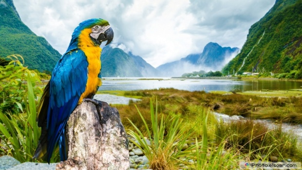 Beautiful Parrot Standing On A Rock