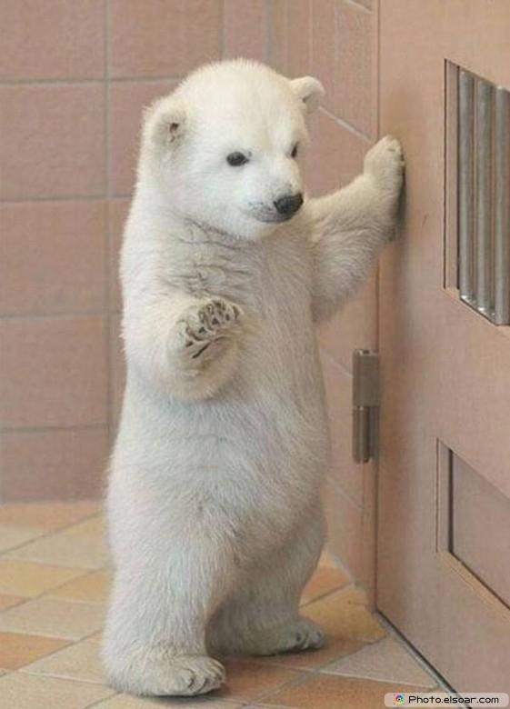 Beautiful Polar Bear Babie F