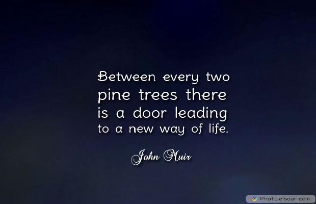 Short Strong Quotes , Between every two pine trees there
