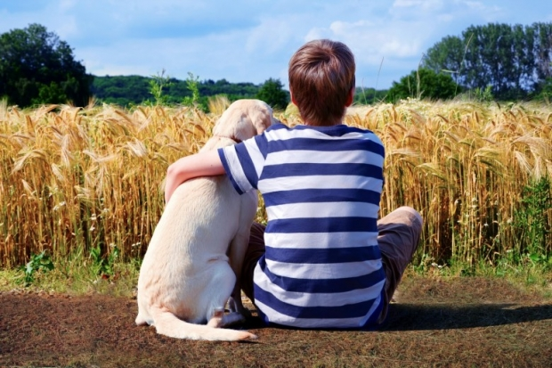 Boy with pet dog, corn field