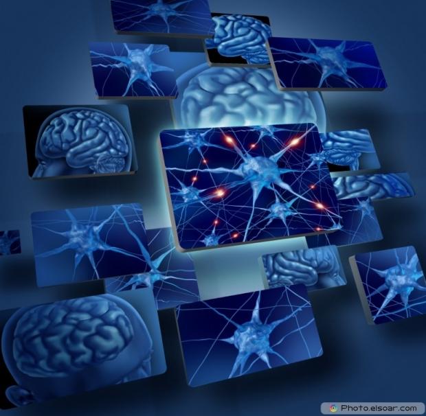 Brain Neurons Concepts