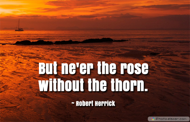 But ne'er the rose without