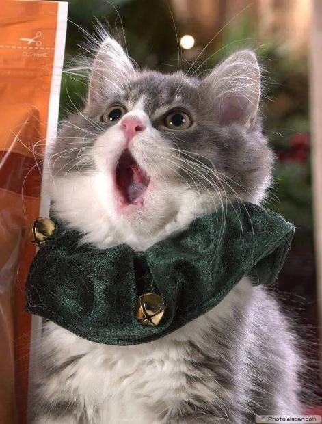 Cat Expression - He Looks Like My Friend