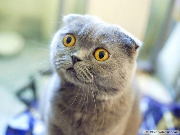 Cat Say: What?