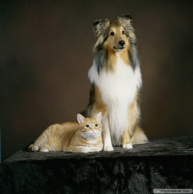 Cat With Dog In Cute Picture