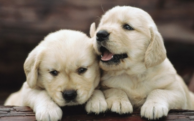 Cats and Dogs. Cute Couple In Pictures 8