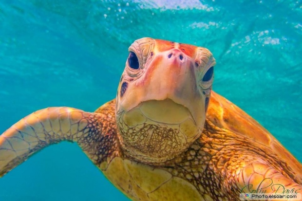 Close-Up Camera With Turtle