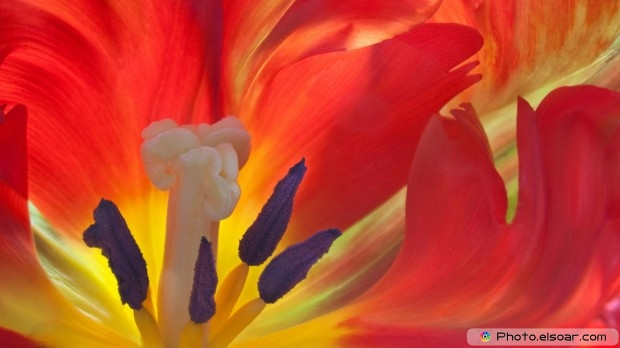 Close-Up Flower. Free HD Wallpaper