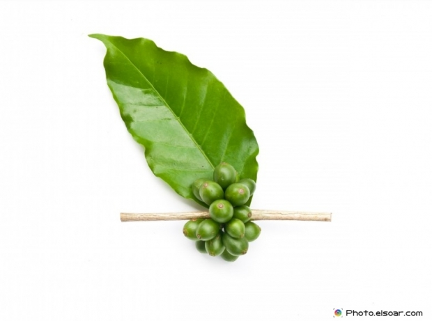 Coffee beans with green leaf