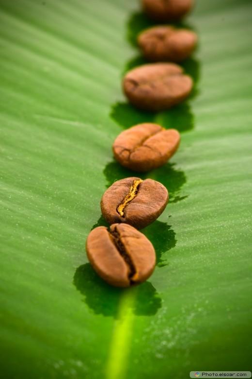 Coffee grains on a green leaf