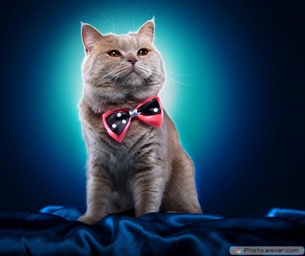 Cute Cat With Necktie