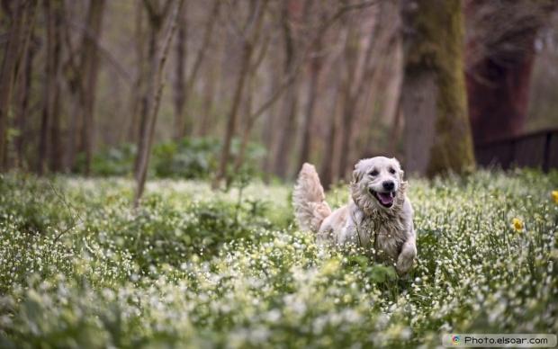Cute Dog Among Plants