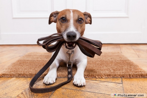 Cute Dog With Leather Leash