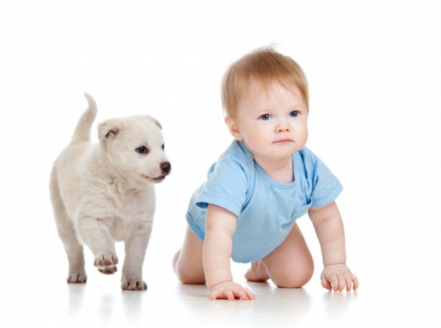 Cute child boy with dog puppy playing
