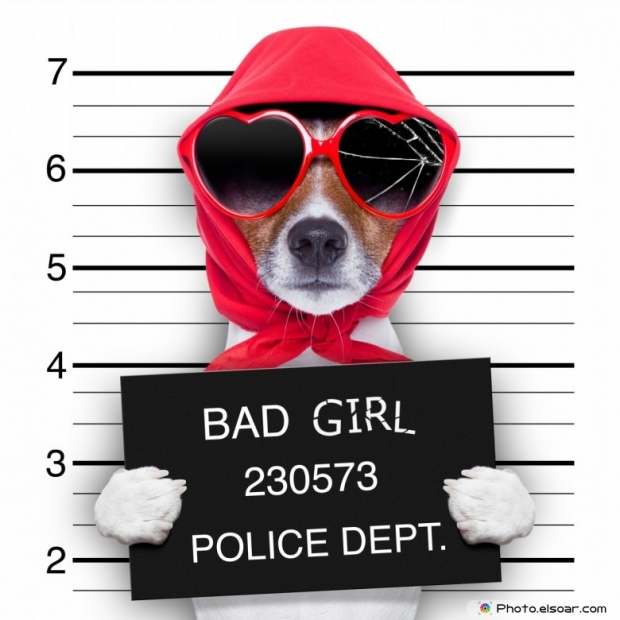 Cute dog with banner BAD GIRL