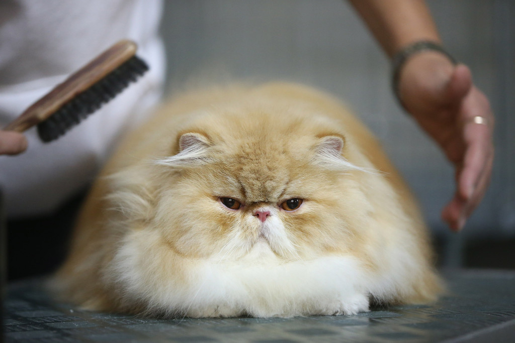 Cute and Funny Animals Pictures