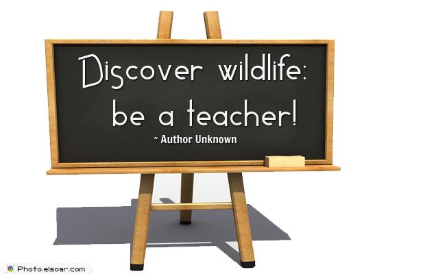 Short Strong Quotes , Discover wildlifebe a teacher
