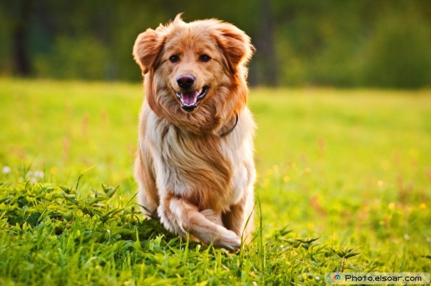 Dog Over Green Grass