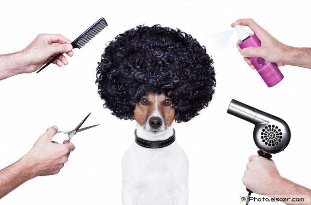 Dog With Salon Supplies
