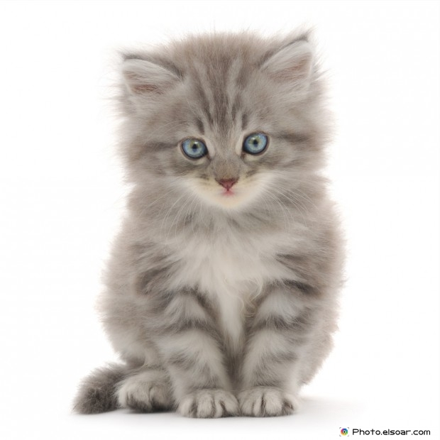 Fantastic Cats With Beautiful Eyes