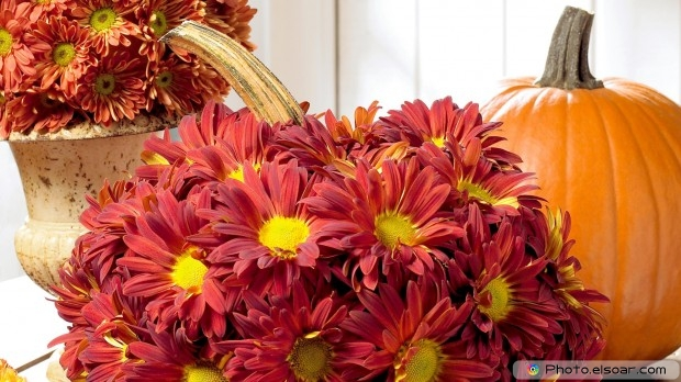 Floral. Free HD Wallpaper