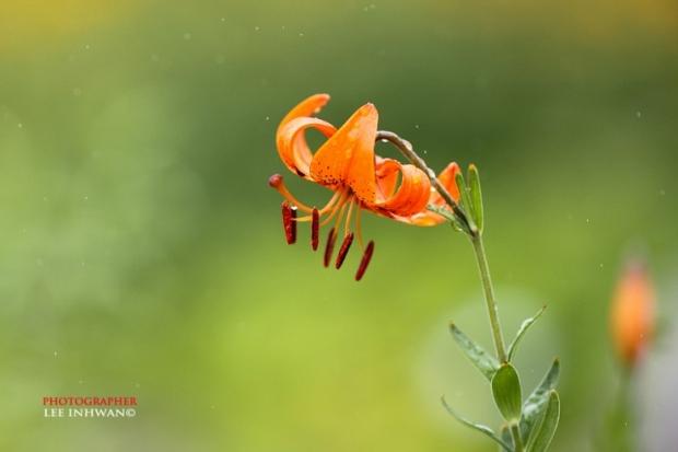 Flower Photography By LEE INHWAN 11