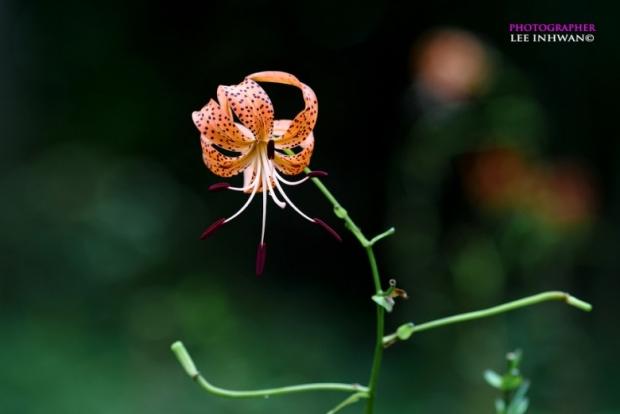 Flower Photography By LEE INHWAN 3