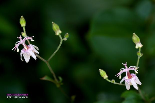 Flower Photography By LEE INHWAN 4